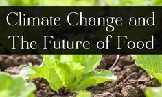 Climate Change Makes Our Food Less Safe (and less abundant)