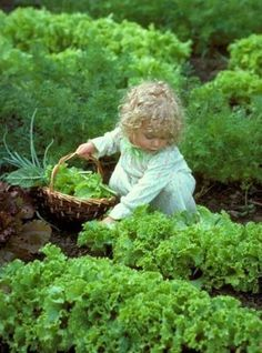 Cute little country girl picking vegetables in the vegetable garden. Garden Care, Country Life, Country Girls, Country Living, French Country, Lifestyle Fotografie, Down On The Farm, Garden Cottage, Beautiful Children