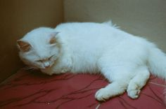 Sleeping Cat | by Wihgi