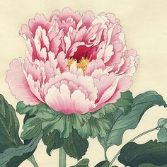 First Edition Peony by Tanigami Konan (1879 - 1928)