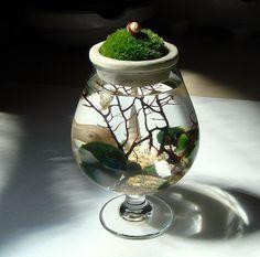 New Moss on Top. Marimo Ball. Unique. Zen. Terrarium by MyZen