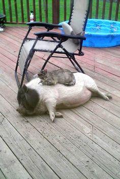 Piggies Make Great Beds!