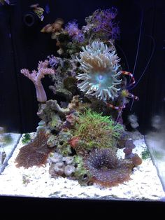 33 Aquarium with Beautiful Coral Reef - meowlogy Marine Aquarium Fish, Coral Reef Aquarium, Marine Fish Tanks, Saltwater Aquarium Fish, Marine Tank, Saltwater Tank, Freshwater Aquarium, Nano Reef Tank, Reef Tanks
