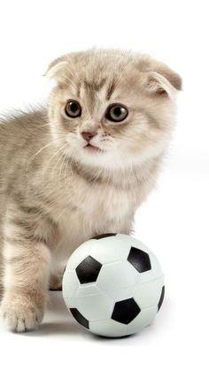 Baby Kittens, Kittens Cutest, Cat App, Cute Animals, Wallpapers, Beautiful, Animais, Cats, Pretty Animals