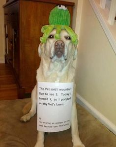 dogs with captions for 2013 | best funny dog pic w caption LOL Funny Dog Pic!