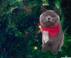 omg cats in space!!!