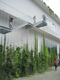 Stunning Vertical Garden Ideas To Make Your Home Fresh And Cool Once you've designed your garden, pick the plants that you want to grow during each season. There's no better solution than to bring a vertical garden. While arranging a vertical garden… Green Architecture, Landscape Architecture, Landscape Design, Vertical Garden Design, Vertical Gardens, Vertical Green Wall, Garden Ideas To Make, Wire Trellis, Green Facade