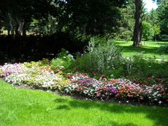 Late Summer Garden: Easy and Cheap Gardening Tips!