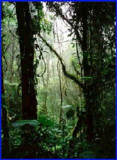 Monteverde Cloud Forest, Costa Rica. I've been dreaming of this place since I was 6 years old. It's #1 on my places to travel before I die.