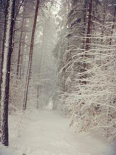 forest by Megara2408, via Flickr