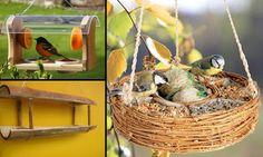 Como atrair pássaros, beija-flores e borboletas para seu jardim ~ Dose de Sustentabilidade
