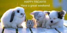 have a great weekend | http://www.graphics16.com/friday/have-a-great-weekend-2/