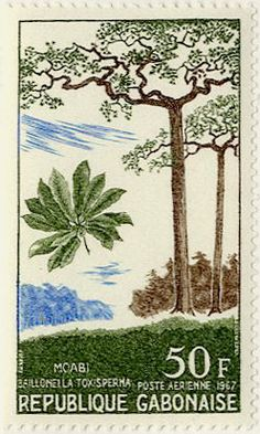 Moabi  (Baillonella toxisperma)  African pearwood, Djave nut.  Stamp from Republic of Gabon,circa 1967