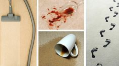 Whats Living in Your Carpet? - http://steammastercarpetcleaners.com/whats-living-in-your-carpet/  Check out http://steammastercarpetcleaners.com to read more