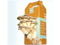 Grow-at-home Mushroom Kit by Back to the Roots at Cooking.com
