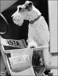 Fox Terrier. Fox Fox Fox  044.250