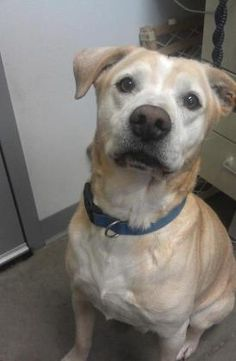 5 / 5    ***SENIOR*** Petango.com – Meet Ito, a 8 years 2 months Retriever, Labrador / Boxer available for adoption in FORT DODGE, IA Address  725 S 32nd Street, FORT DODGE, IA, 50501  Phone  (515) 955-8343  Website  http://www.almosthomeiowa.org  Email  chris@almosthomeiowa.org