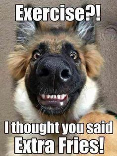 Funny Animal Pictures with Captions Source by lindyoh dog dog memes dog videos videos wallpaper dog memes dog quotes dogs dogs pictures dogs videos puppies puppy video Funny Animal Jokes, Funny Animals With Captions, Stupid Funny Memes, Cute Funny Animals, Funny Shit, Animal Captions, Funny Stuff, Funny Men, Fun Funny