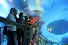Entertaining families all year round is one of the many things Birmingham does best. From day trips to weekend breaks, there's plenty to pack in and explore with all the family. Sea Life Centre Birmingham, Weekend Breaks, Day Trips, Explore, Fun Things, Travel, Kids, Young Children, Viajes