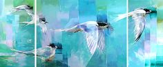 sheila brown nz bird artist, white fronted terns in flight, teal blue colors