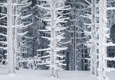 ponderation:  The Enchanted Winter byHeiko Gerlicher