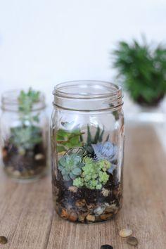 Pflanzen Terrarium im Ball Mason Glas - das große Glas ist super einfach zum befüllen!
