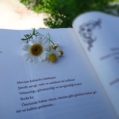 Book Summaries, Daisy, My Photos, Letters, Words, Quotes, Tableware, Quotations, Dinnerware
