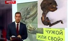 Criatura misteriosa encontrada nas margens do Rio Kovashi, na cidade de Sosnovy Bor (Rússia)