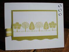 CAS12  'Little Kiwi Forest'
