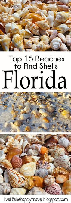 Sea shells can be found on a lot of Florida Beaches. Thses are the ones that they are consistently found on.