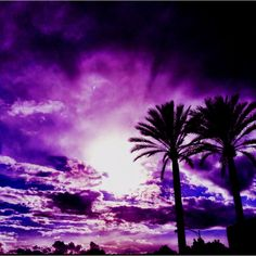 Palm Tree Sunset Purple | Purple palm tree sunset | My Phoneography Addiction