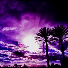 Palm Tree Sunset Purple | Pinned by Christine Park