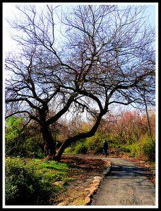 A walk in the Galilee . Israel