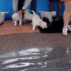 Some puppies swimming for the first time - aww Funny Animal Memes, Funny Cats, Funny Animals, Funny Memes, Fun Model Poses, Animal Pictures, Cute Pictures, Super Video, Funny Thoughts