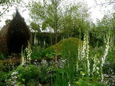 Focus Ireland Garden at Bloom 2011: Damian Costello Garden Design