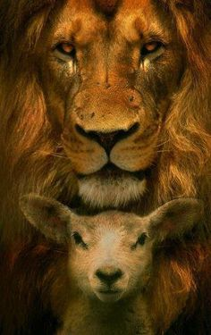 The Lion and the Lamb. Jesus came as the lamb of God. Jesus' coming will be a lion in revelation Lion And Lamb, Prophetic Art, King Of Kings, Christian Art, Christian Quotes, Lions, Christianity, Cute Animals, Creatures