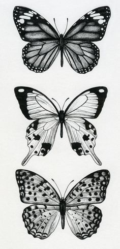 Free Printable Butterfly Coloring Pages For Kids In 2018