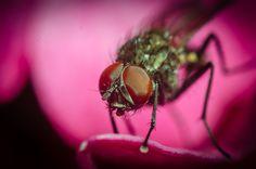 Fly on pink flower by Marek Weisskopf on 500px