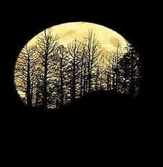 Harvest moon 2013 | dreams , fiction , leaves , moon , short story