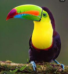 Source :flying of birds Tropical Art, Tropical Birds, Exotic Birds, Colorful Animals, Colorful Birds, Cute Animals, Pretty Birds, Beautiful Birds, Animals Beautiful
