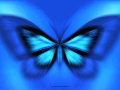 Blue Butterflies Wallpaper, wallpaper, Blue Butterflies Wallpaper ...