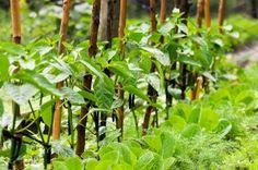 Organic Fertilizers & Soil Amendments... Pepper sprouts  #Amazmerizing