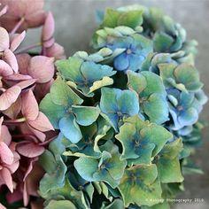 pastels mint rose