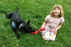 Read a Testimonial Blog recently received from a Family client for Bob Taylor of Dog Wish