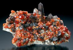 Deep reddish-orange Spessartine Garnet with dark Smoky Quartz. From Tongbei, Yunxiao County, Zhangzhou Prefecture, Fujian Province of China. Measures 6.5 cm by 10.1 cm by 5.5 cm in total size. Ex. J. Webb Mineral Collection