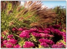 Three Easy-Care Perennials