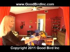 Parrot Flight Training - Recall and Go to a Perch - YouTube