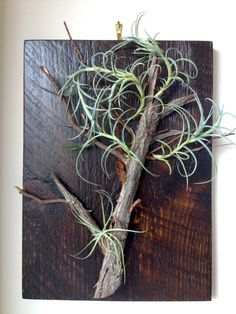 A reconstructed tree made with all upcycled materials. Air Plant Tree Art by LivingGallery on Etsy, $80.00