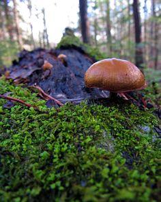 """Sam Calhoun on Instagram: """"Lovely little mushrooms on moss covered log.  Bankhead National Forest, AL. #explore #getoutstayout  #optoutside #getoutide #adventuretime…"""""""