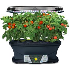 Cultivate Countertop Crops With Half Price Aerogarden 640 x 480